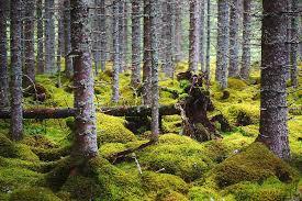 """Üle-Eestilisel viktoriinil """"Noored Euroopa metsades"""" pääses viis meie võistkonda vabariilikku vooru"""